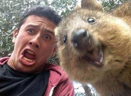 Quokka Selfie e Avventure nello Spazio