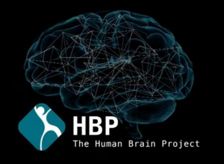 Risse attorno al Segreto del Cervello Umano