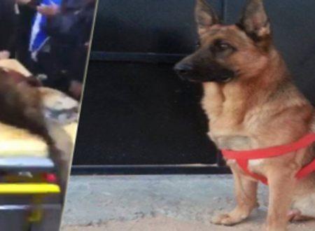 Akil – Cane Poliziotto ucciso al Museo del Bardo