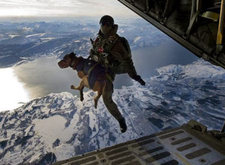 Animali nell'Esercito
