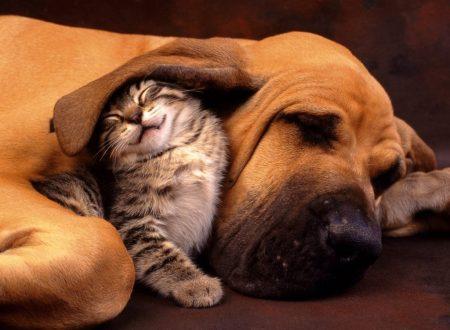 I Sogni nei Cani e nei Gatti – Anche a occhi aperti