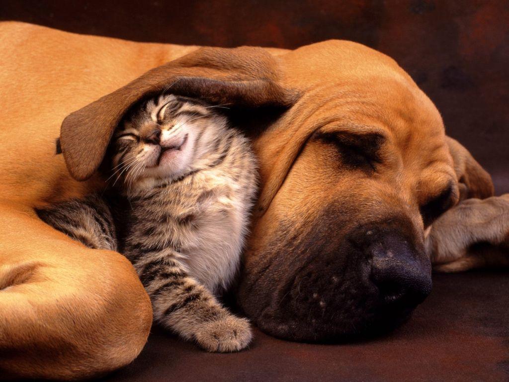 cane-gatto-sogni