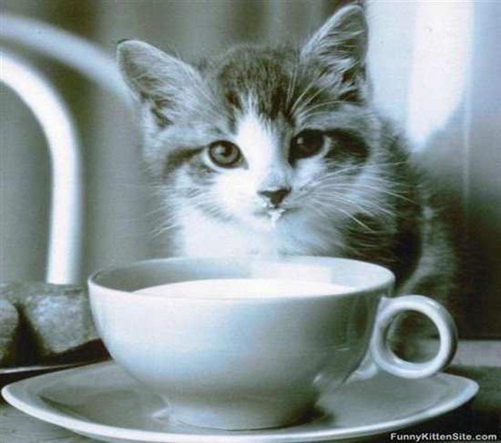 gatti latte
