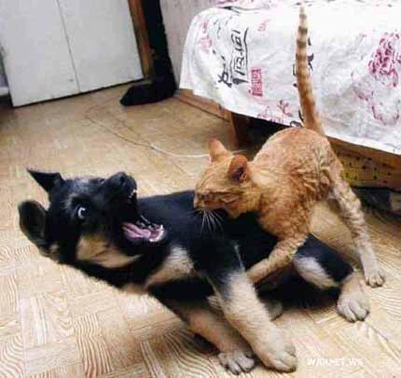 gatto--arrabiato2