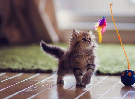 Top Ten – I 10 migliori giochi con i gatti