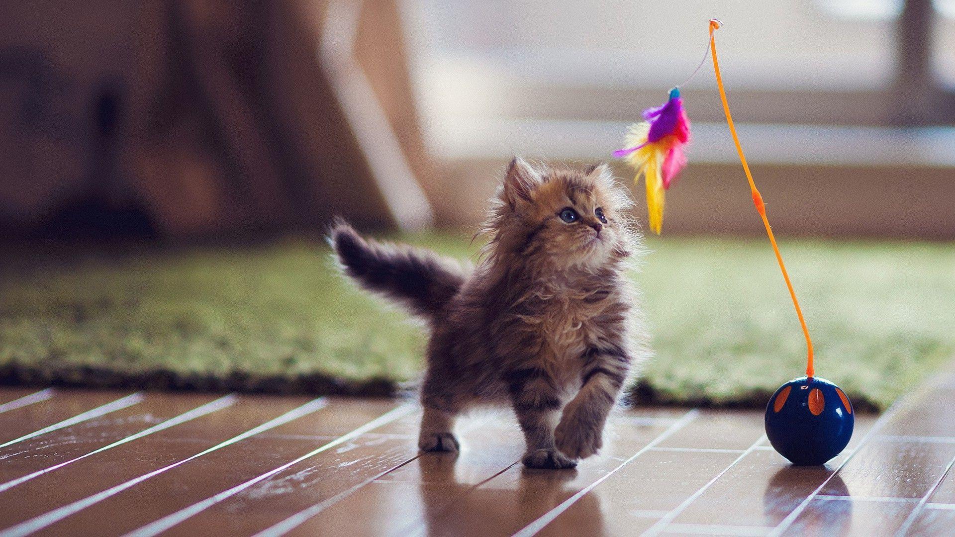 Cute Wallpapers For Mobile Hd: Top Ten – I 10 Migliori Giochi Con I Gatti