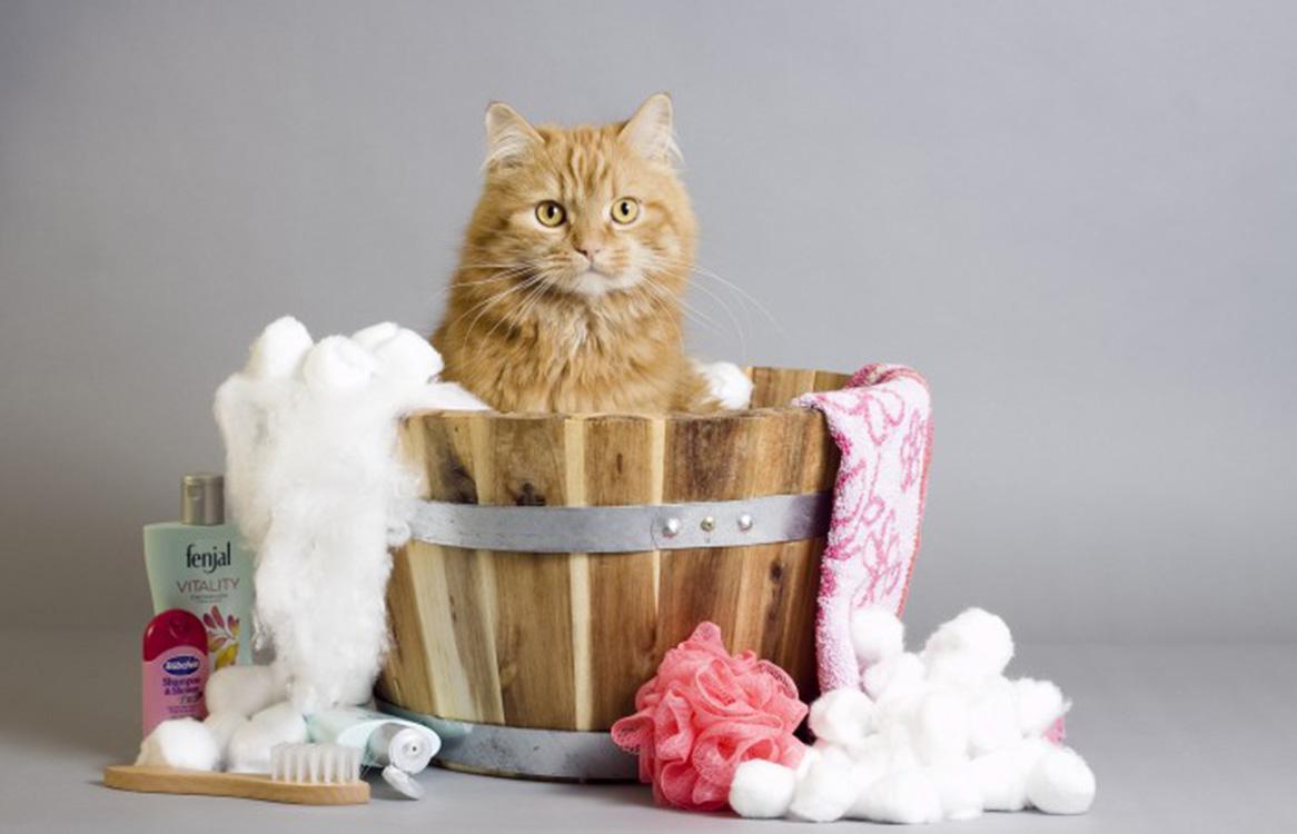gatto igiene