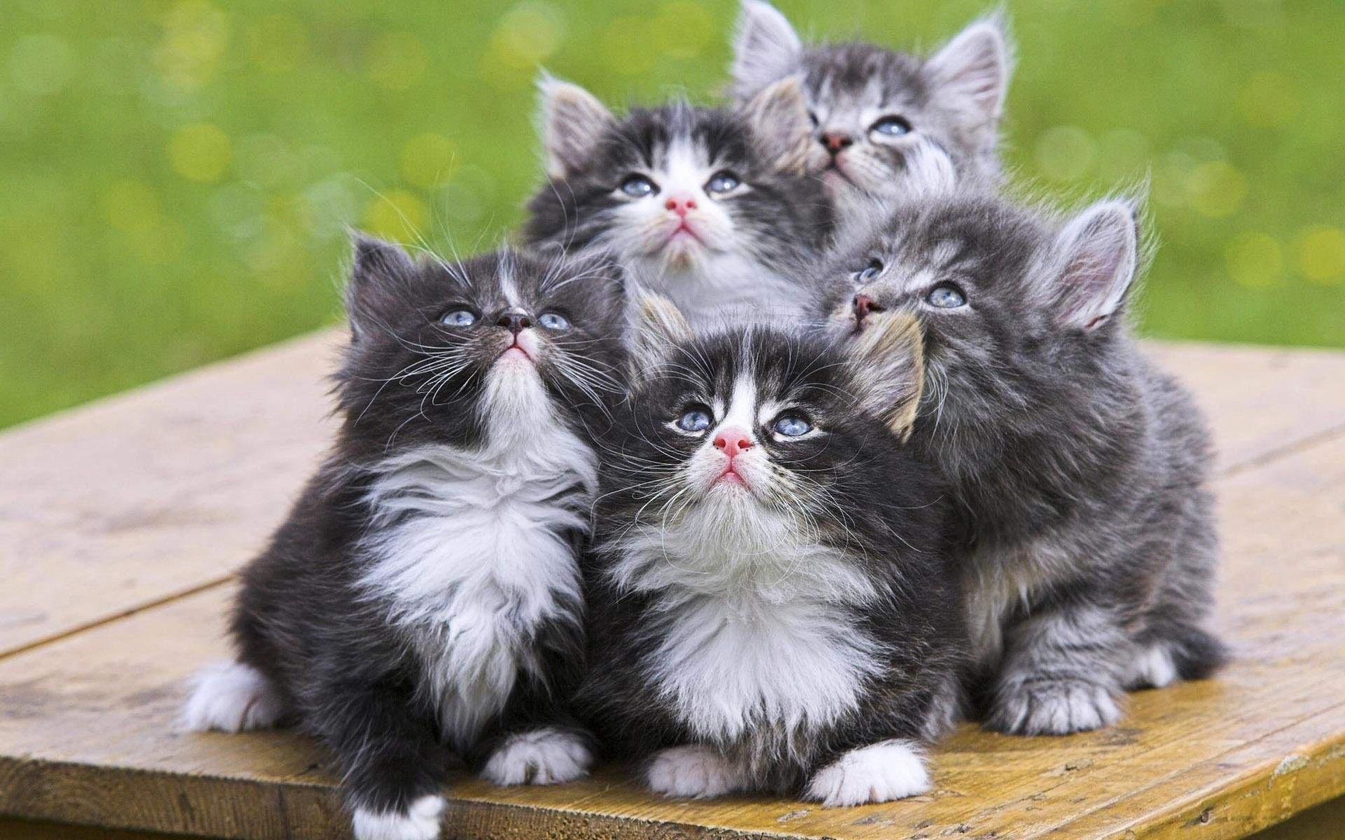 Delightful Eu0027 Divertente Approcciare Il Gioco Tentando La Comunicazione Con Il Gatto  Rispondendo Ai Suoi Miagolii