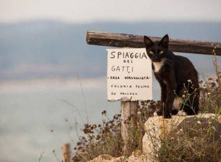 Sardegna – Colonia felina a rischio