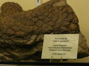 Impronta della pelle del Triceratops