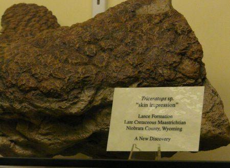 Dakota – la mummia di dinosauro