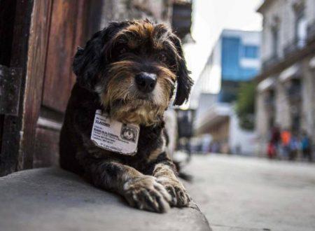 I Cani adottati dagli Enti Cubani