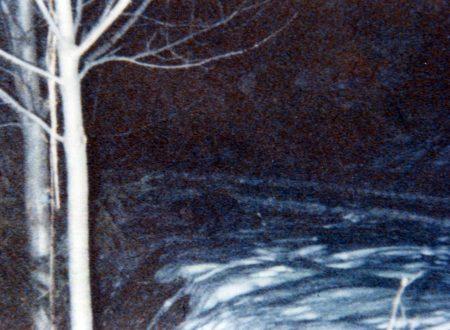 Elfi e Gnomi della Forestale – Ecco il Dossier