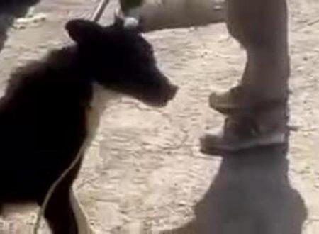 Iran – Cani Randagi Uccisi con l'Acido