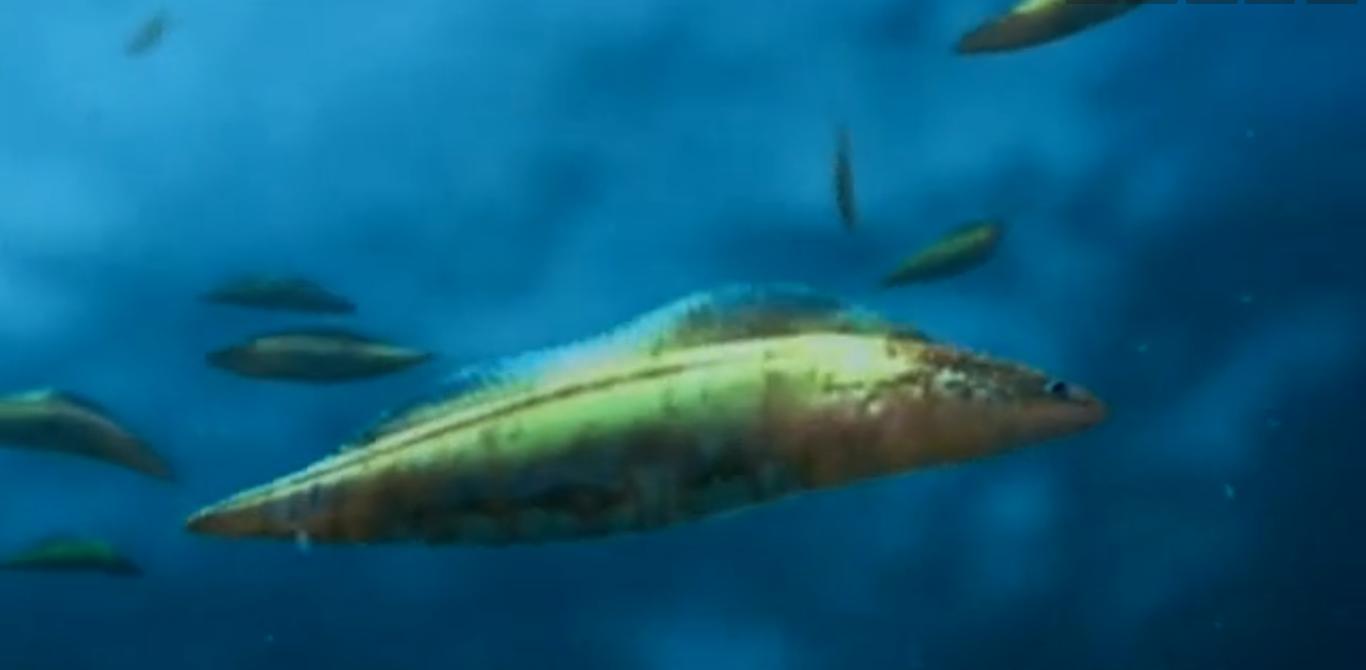 Haikouichthys