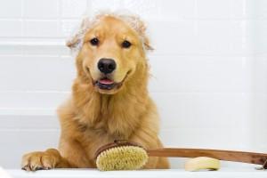 I Cani e la Toelettatura – Quando l'Igiene è Salute