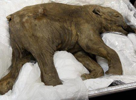 Clonare un Mammut – La de-estinzione è possibile