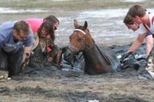 Quel Cavallo andava salvato