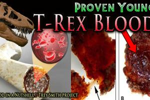 T-Rex – estratto DNA utilizzabile?