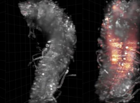 Viaggio 3D in una Rete Neurale
