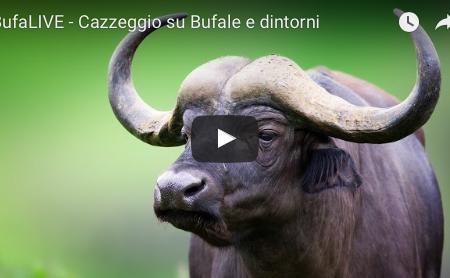 BufaLIVE – Cazzeggio su Bufale & dintorni